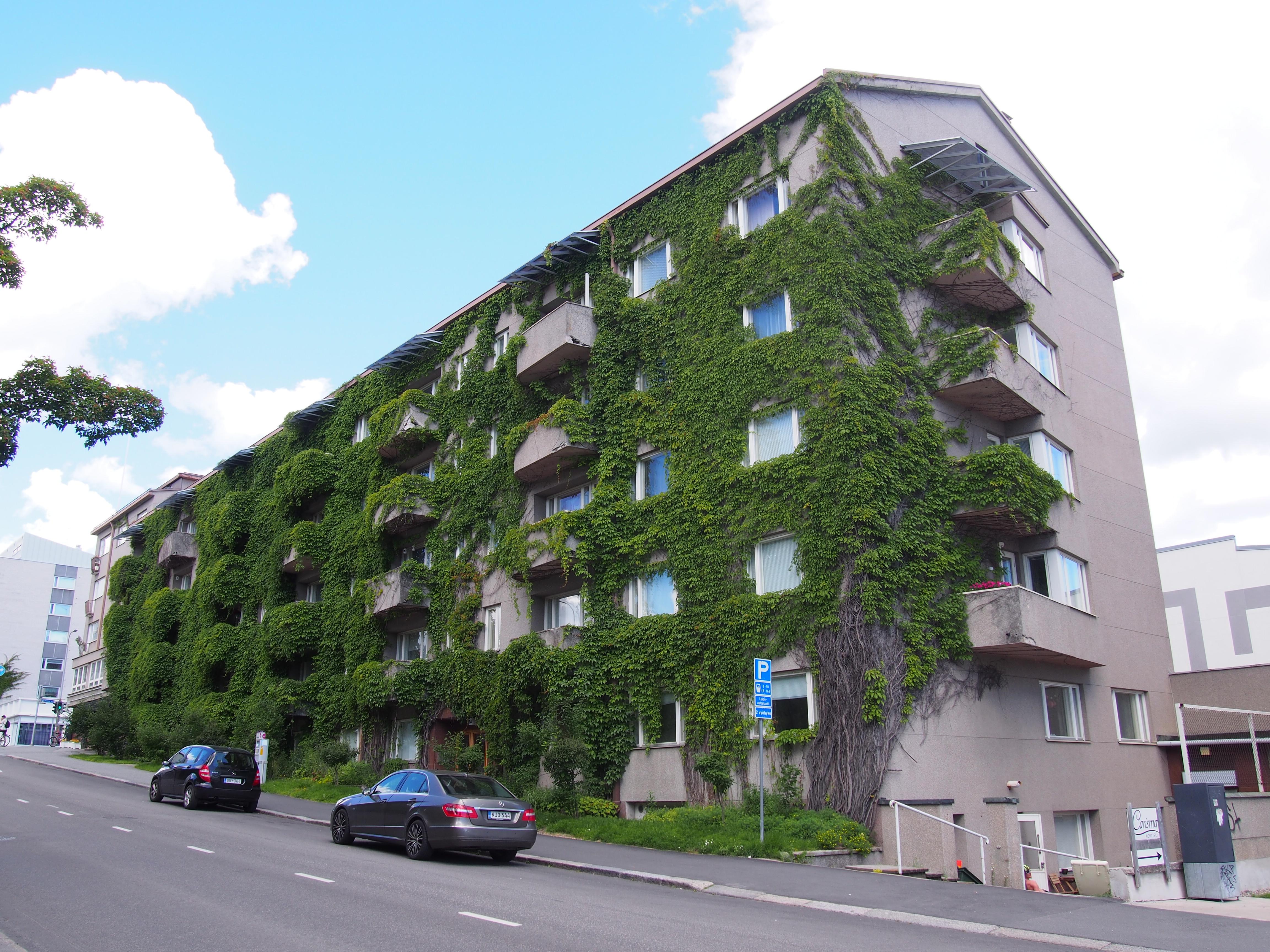 Hieno köynnös seinällä muuttaa kerrostalon vihreäksi. (Kuva Mauri Hähkiöniemi)
