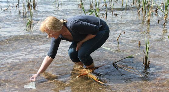 Kemikaalikäsittelyn vaikutusaika riippuu kuitenkin järven syvyydestä; matalissa järvissä keskimääräinen vaikutusaika on jäänyt kuuteen vuoteen, mutta syvissä, kerrostuvissa järvissä aika on ollut jopa yli 20 vuotta. (Kuva: Esko Kuusisto)