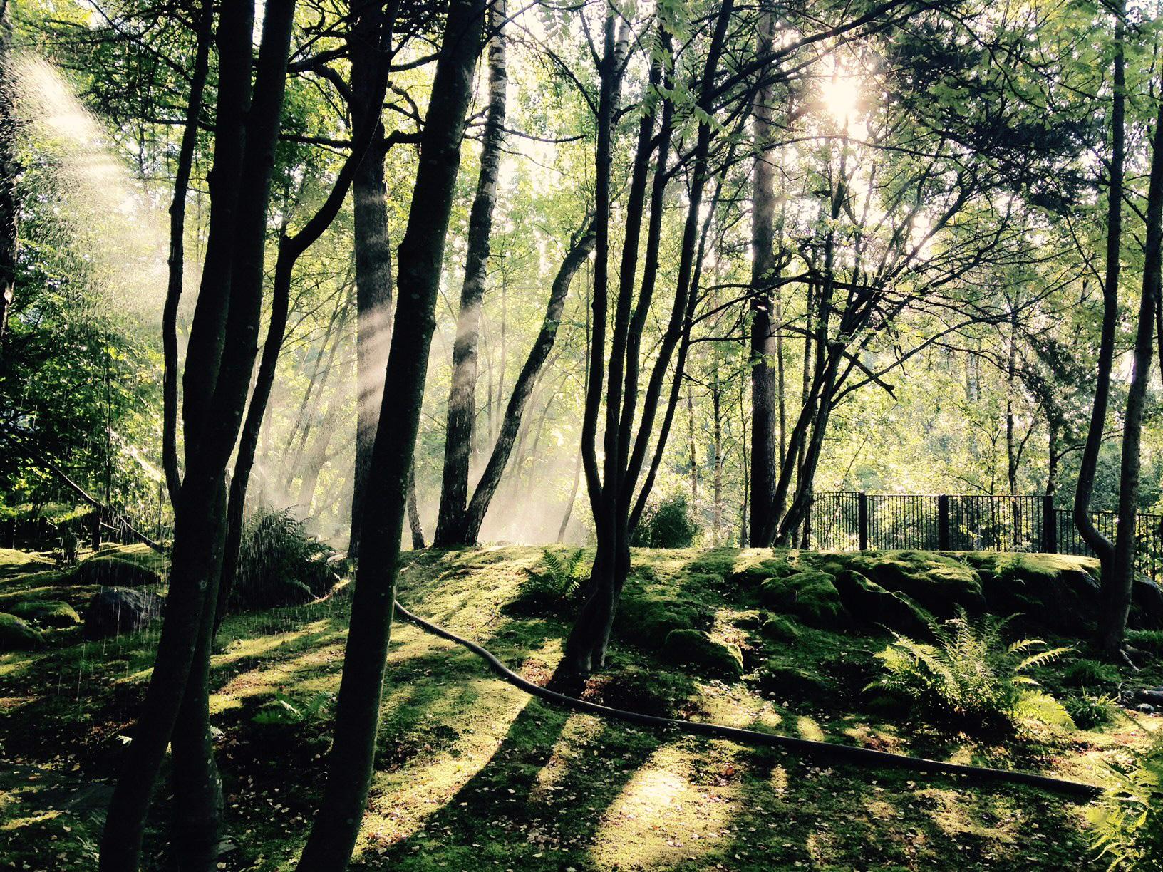 Roihuvuoren japanilaistyylinen puutarha Helsingissä oli yksi 100 Puistoa -kampanjan menestyjistä. (Kuva: Satu Karjalainen)