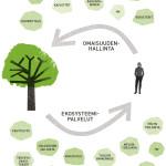 Omaisuudenhallinnan avulla varmistetaan, että kaupunkipuut pystyvät tuottamaan ekosysteemipalveluja eli aineellisia ja aineettomia hyötyjä
