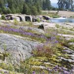 Kotkan Katariinan Meripuisto on hieno esimerkki kestävästä ympäristörakentamisesta. Alueen luontainen kasvilajisto saa kukoistaa sellaisenaan kallioisessa maastossa.