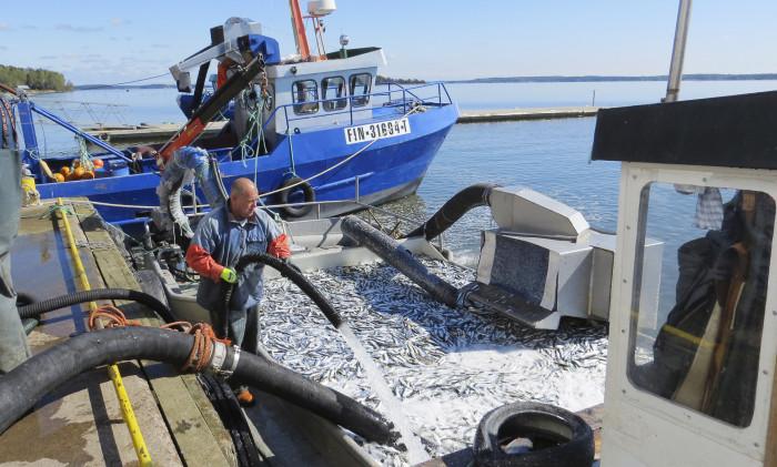 Ravinneneutraali kunta- eli RANKU- hankkeeseen löytääkseen ajatuksia siihen, miten kalanperkuujätteiden kierrätystä voisi parantaa.